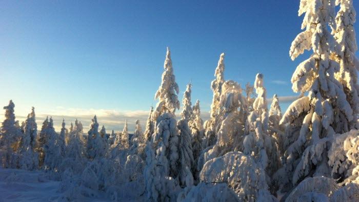 Vinterlandskap skog