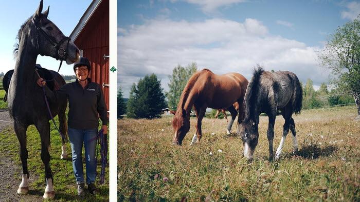 Hästföretagen ska kvalitetssäkras. Aja Blomberg Andersson har jobbat med detta.