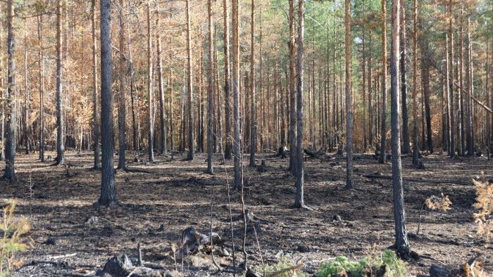 Branden i Färila