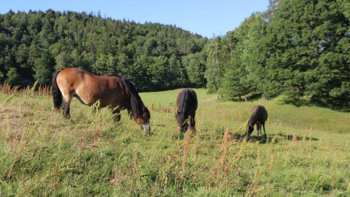 Gusseröd hästar hage utomhus