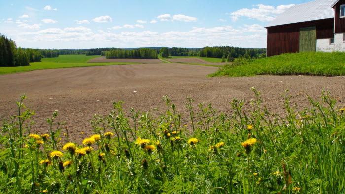 Odlingslandskap i Ragvaldsträsk, Skellefteå, Västerbotten