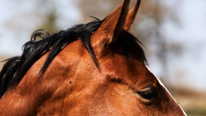 Hästar.