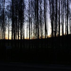 skogsbild skymning