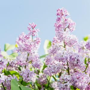 Blommor i närbild, Hörby gård. Foto: Ester Sorri