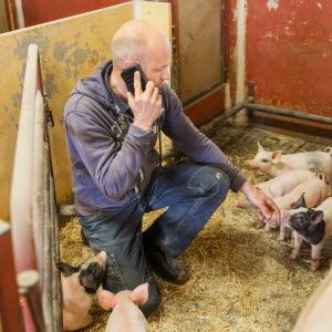 Företagare med telefon i grisbox