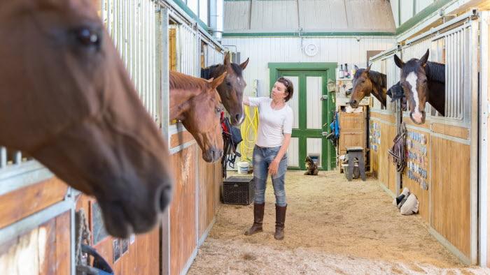 Företagare klappar häst i box i stallgång