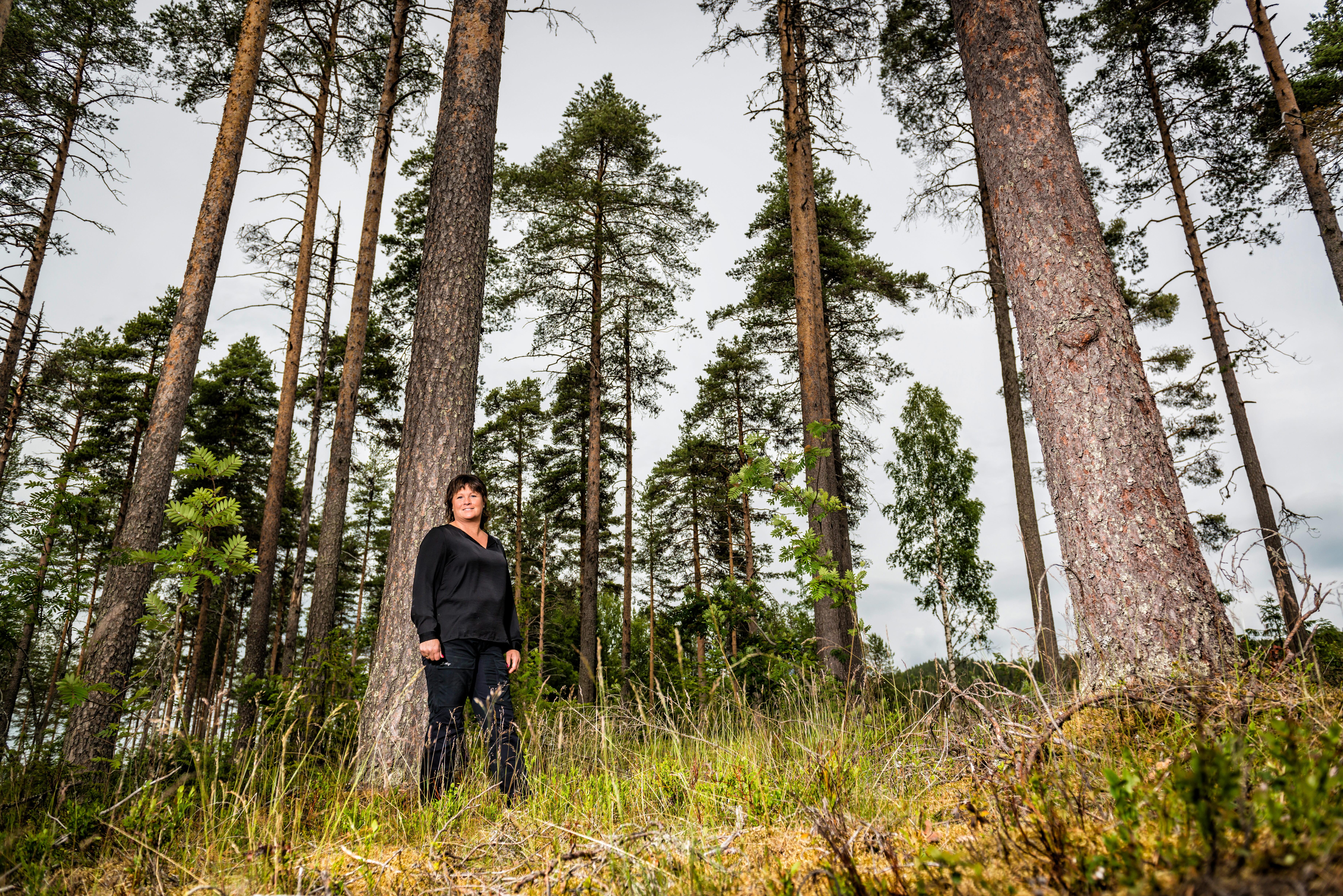 Lotta Folkesson, LRF Västerbottens ordförande, i skogen