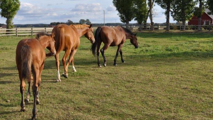 Hästar hemma hos Petra Wirtberg