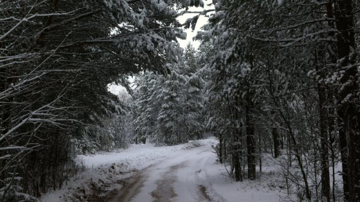 Vinterskog och väg
