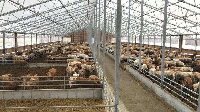 Köttdjur Nya Zeeland