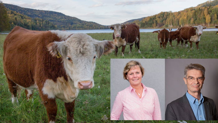 Åsa Odell och Jan Eksvärd håller webbmöte om klimat