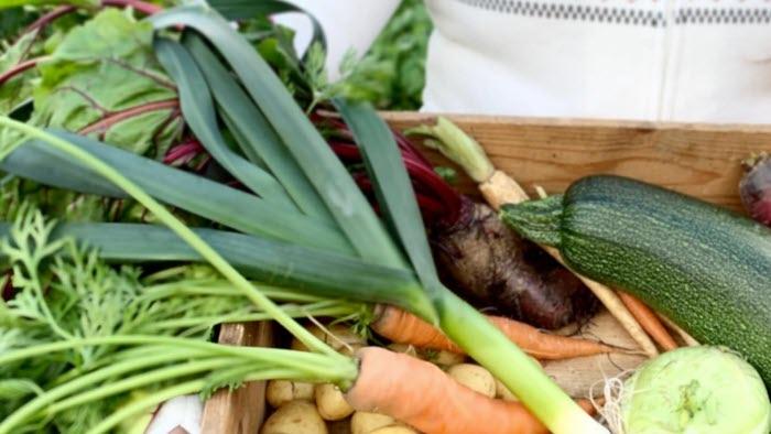 Odling skörd grönsaker kvinna