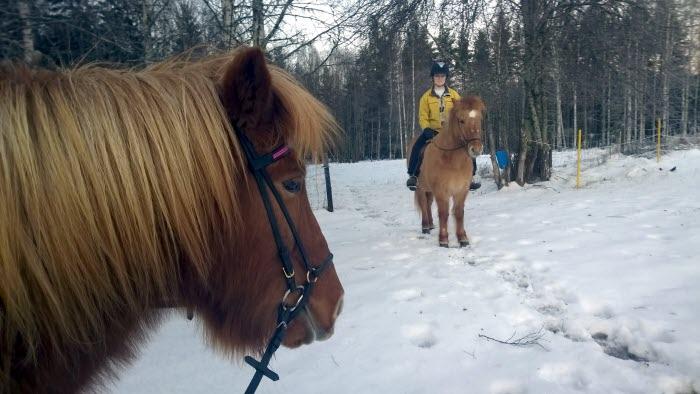 Hästar i vinterlandskap