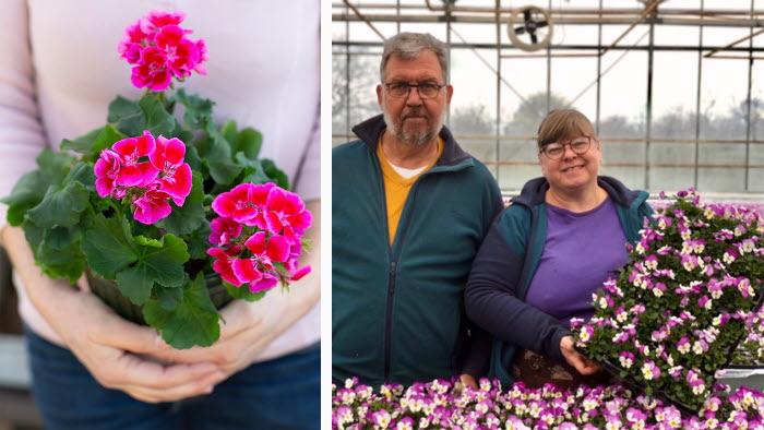 Årets pelargon och kreativa blomsterförsäljare i coronatider
