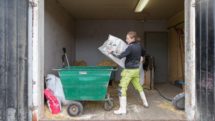 Företagare häller mat i fodervagn