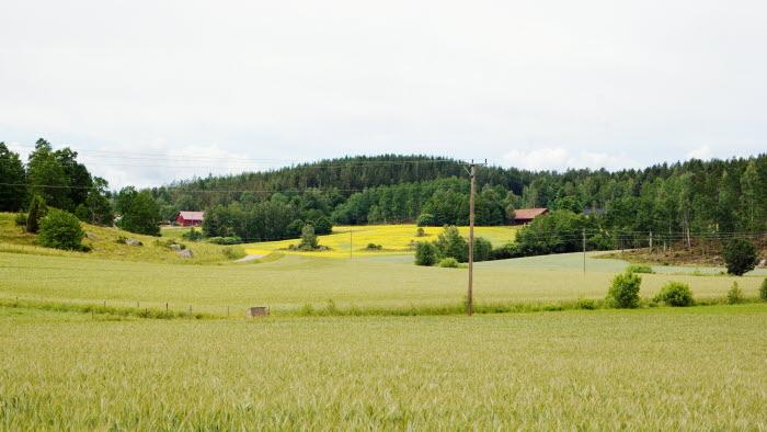 Thomas Johansson. St Aby, Målilla.