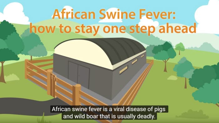 afrikansk svinpest