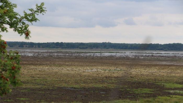 Hornborgasjön - Stora delar av sjön är torrlagd.