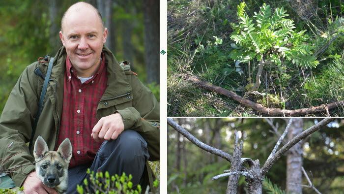 Sven Erik Hammar i LRF Skogsägarna är nöjd att skogsägarna och jägarnas riksförbund har kommit överens om skogsskador av vilt