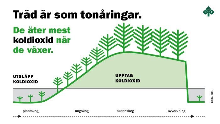 Graf som visar skogens skolupptag