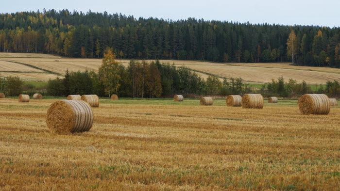 bal på fält  i Skellefteå, Västerbotten