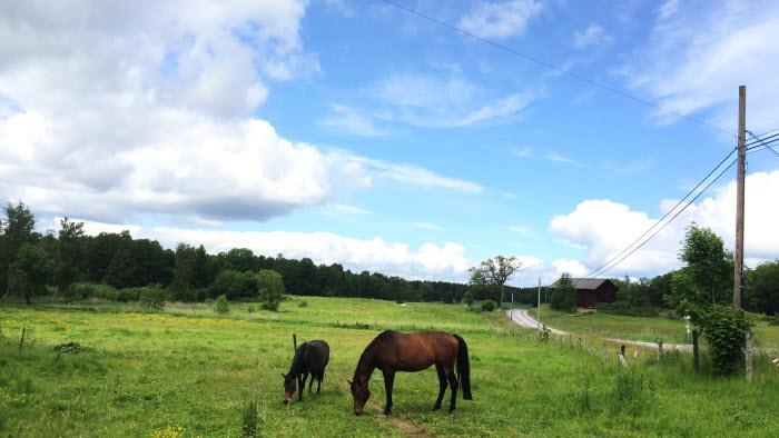 Två hästar, en väg och en kraftledning
