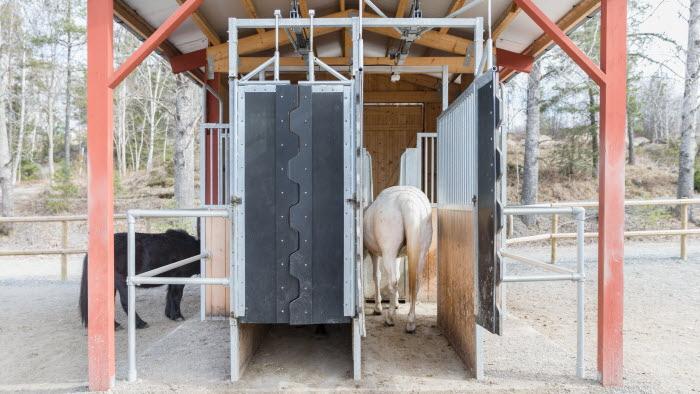 Häst i lösdriftens utfodring