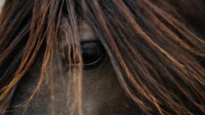 Häst. Nivagården, Korpikylä.