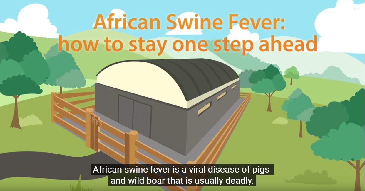 Kina drabbat av Afrikansk svinpest: Så påverkas Sveriges