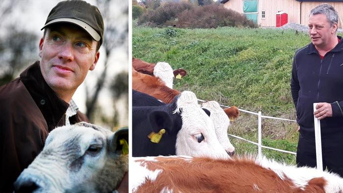Sveriges Nötköttsproducenter numera är organisationsmedlemmar och Sveriges Lammköttsproducenter är nya intressemedlemmar. Till vänster Tomas Olsson, ordförande lamm och till höger Jan Forssell, ordf nötkött