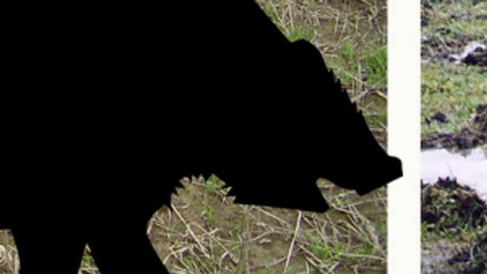 LRF har beslutat att revidera vildsvinspolicyn
