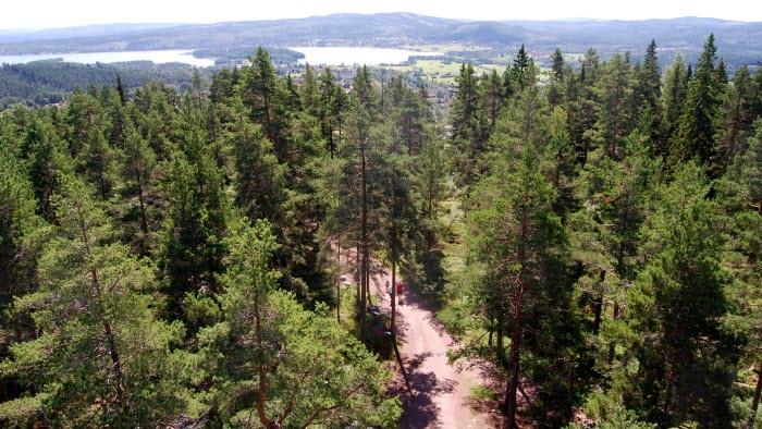 skog dalarna väg2