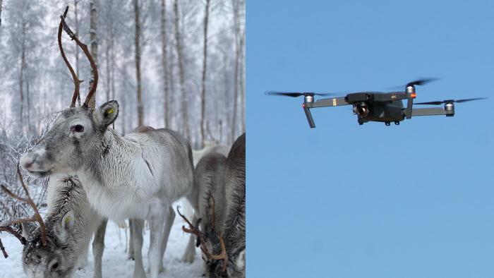 Inom EUs innovationssatsning EIP-Agri finns bland annat ett svenskt projekt för att öka användningen av drönare inom rennäringen
