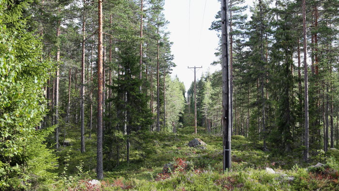 Skog med elgata