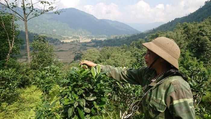 Vietnam We Effet