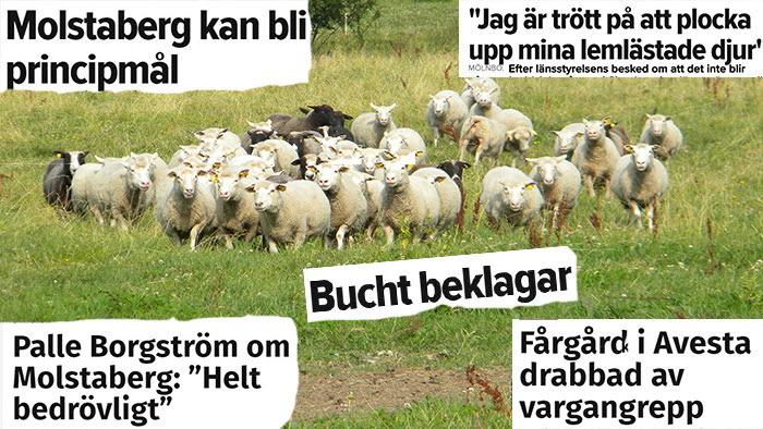 Dagarna som chockade lamm-Sverige