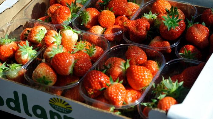 Hjälmshults jordgubbar