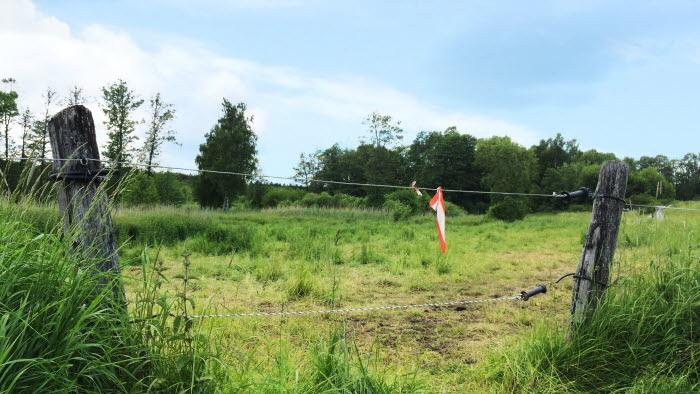 Ett staket och lite gräs