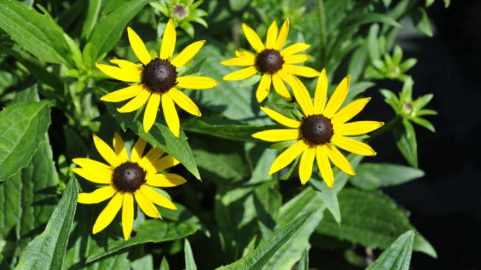 blomma beskuren