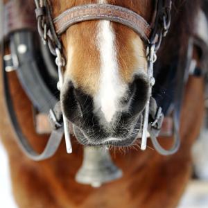 Körhäst