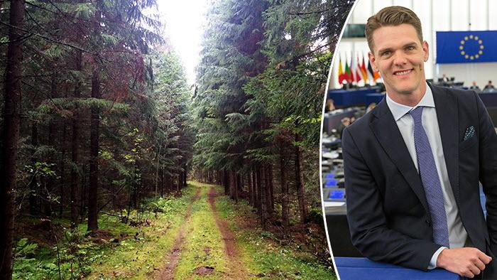 Christofer Fjellner hyllar LRFs  opinionsarbete kring skog och äganderätt