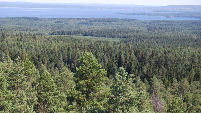 milsvid skog dalarna