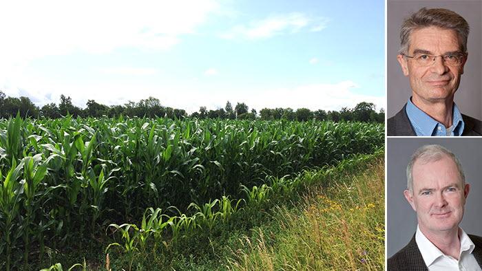gmo, genteknik, växtförädling