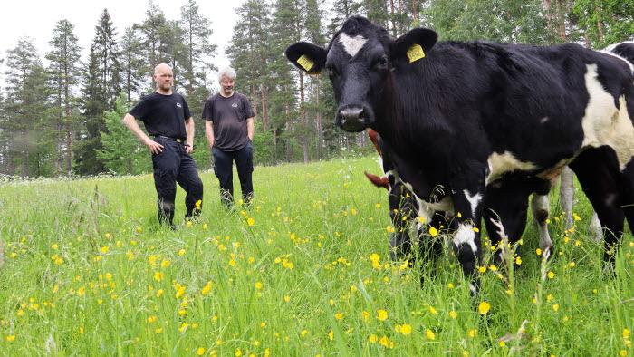 Renbergsvattnets Lantbruk årets nötköttsföretag i Västerbotten 2021