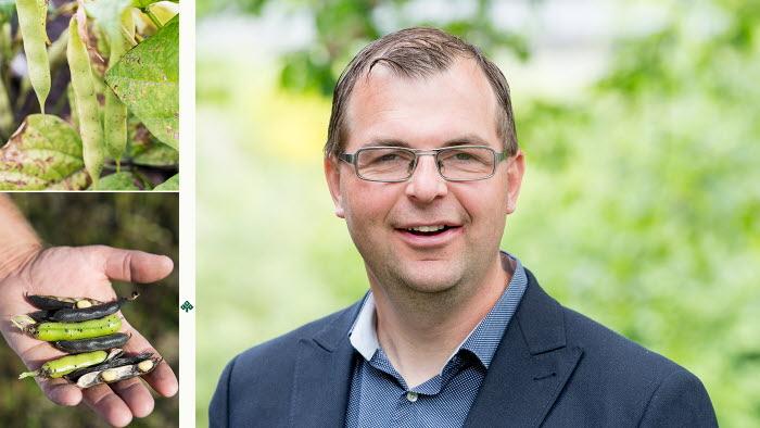 Vegetariskt intresse är jackpott för svenska bönodlare