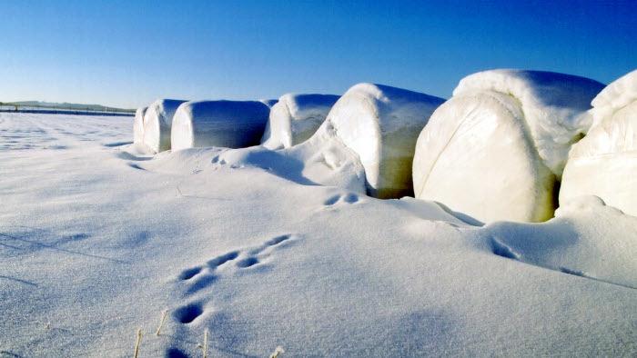 Rundbalar i snö
