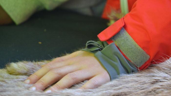 Elever lär sig om skog och jakt i skogen på Bonden i skolan