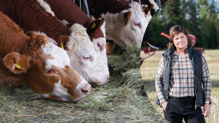 Montage köttdjur och Lotta Folkesson