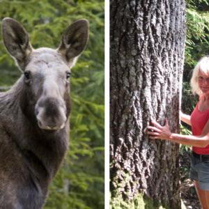 Bild kvinl skogsägare
