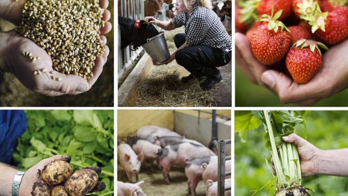Kollage av bondens mat